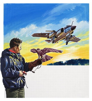 Falcon Flight Fine Art Print by Wilf Hardy