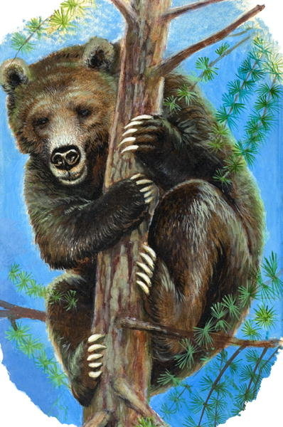 Bear in a Tree (gouache on paper) Wall Art & Canvas Prints by English School