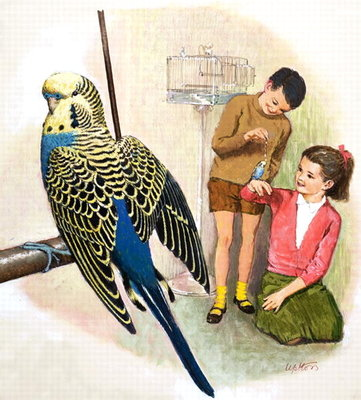 B is for Budgerigars, illustration from 'Treasure' (gouache on paper) Fine Art Print by Clive Uptton