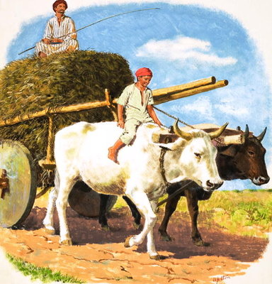 O for Oxen (gouache on paper) Fine Art Print by Clive Uptton