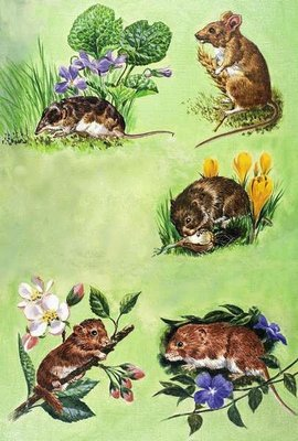 Mice, voles and shrews Fine Art Print by Eric Tansley