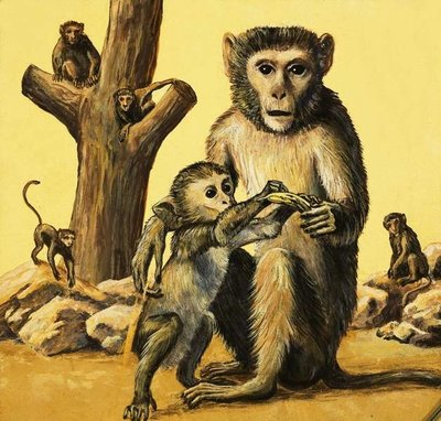 Rhesus Monkey Fine Art Print by Eric Tansley