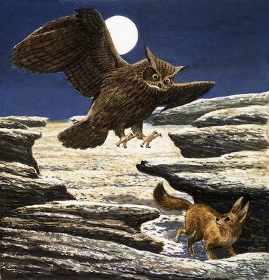 The Fennec Fox and Eagle Owl Fine Art Print by Eric Tansley