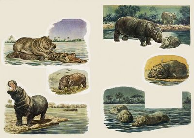 Peeps Into Nature: The Hippopotamus Fine Art Print by Eric Tansley