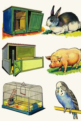 Pets and Their Homes: Rabbit, Pig and Budgerigar Fine Art Print by English School