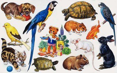 Animal montage Fine Art Print by English School