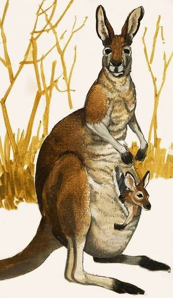 Kangaroo Fine Art Print by Eric Tansley