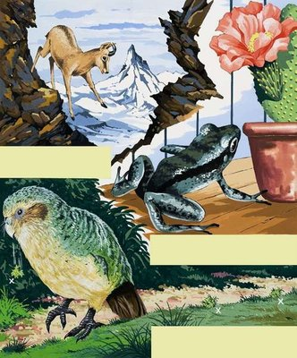 Wildlife montage Fine Art Print by English School