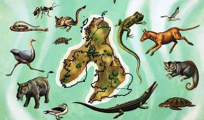 Unidentified montage of animals around map of Great Britain Fine Art Print by English School