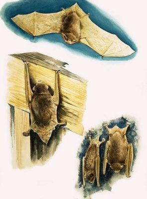 Bats Fine Art Print by Eric Tansley