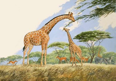 Nature Wonderland: High Tea for the Giraffe Poster Art Print by English School