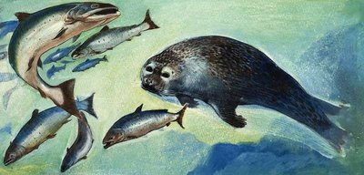 Seal and fish Fine Art Print by English School