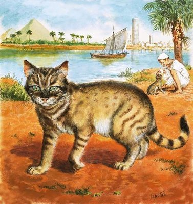 Cat in on the banks of the Nile Fine Art Print by Clive Uptton