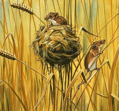 Field mice Fine Art Print by English School