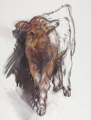 Highland Calf, 2008 Postcards, Greetings Cards, Art Prints, Canvas, Framed Pictures, T-shirts & Wall Art by Lara Scouller