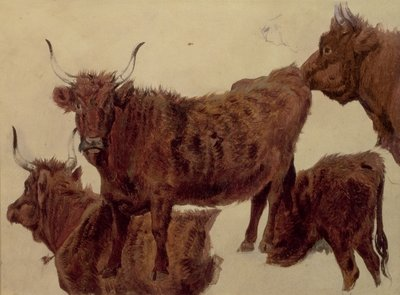 Studies of Highland Cattle Fine Art Print by Richard Ansdell