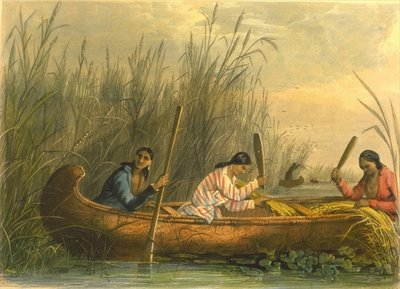 Gathering Wild Rice, 1853 Wall Art & Canvas Prints by Captain Seth Eastman