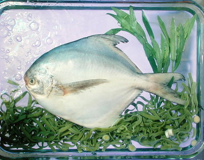 Pomfret, tagliatelle, tarragon & spring onion, 1990 Fine Art Print by Norman Hollands