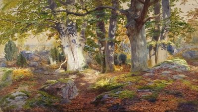 Autumn Sunlight after Rain, Fontainebleau Wall Art & Canvas Prints by Andrew MacCallum