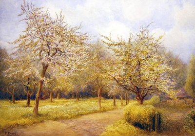 Trees in Blossom Fine Art Print by Frederick Henry Evans