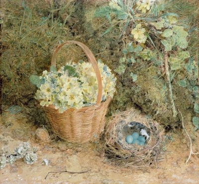Chaffinch's Nest with Primroses Wall Art & Canvas Prints by William Henry Hunt