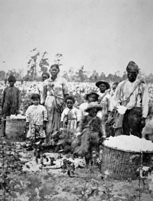 A slave family in a Georgia cotton field, c.1860 Fine Art Print by American Photographer