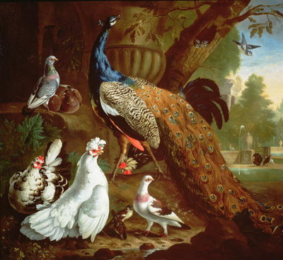 A Peacock in a Classical Landscape, 1719 Fine Art Print by Pieter Casteels