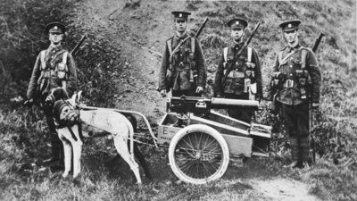British Dogs of War on the Belgian model: an Officer's experiment in dog-traction for machine-guns, from 'The Illustrated War News' Fine Art Print by English Photographer
