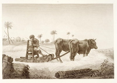 Harvesting Corn, from Volume II Arts and Trades of 'Description of Egypt', pub. under the orders of Napoleon, 1822 Fine Art Print by Nicolas Jacques Conte