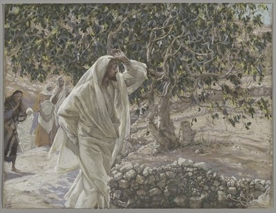 The Accursed Fig Tree, illustration from 'The Life of Our Lord Jesus Christ', 1886-94 Fine Art Print by James Jacques Joseph Tissot