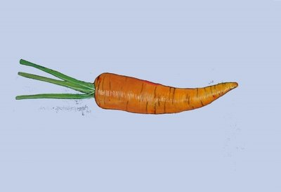 Carrot, 2007 Fine Art Print by Sarah Thompson-Engels