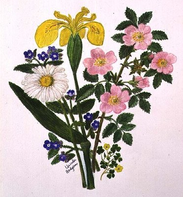 Iris, Speedwell, Daisy and Dog rose (w/c on paper) Fine Art Print by Ursula Hodgson