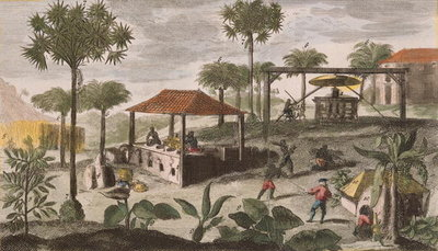 Sugar Refinery, illustration from 'Histoire Generale des Antilles Habitees par les Francois Vol. 2' by Jean Baptiste Du Tertre (1610-1687) published 1667 (coloured engraving) (see also 177261) Wall Art & Canvas Prints by French School