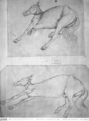 Dead horses, from the The Vallardi Album (pen & ink on paper) (b/w photo) Fine Art Print by Antonio Pisanello