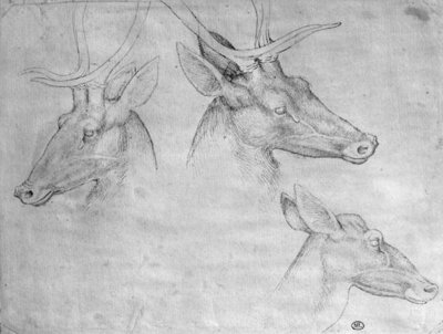 Two heads of stags, one head of a doe, from the The Vallardi Album Fine Art Print by Antonio Pisanello