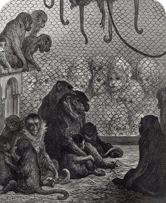 'London' Monkeys (engraving) (b/w photo) Fine Art Print by Gustave Dore