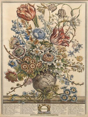 March, from 'Twelve Months of Flowers' by Robert Furber (c.1674-1756) engraved by Henry Fletcher (colour engraving) Postcards, Greetings Cards, Art Prints, Canvas, Framed Pictures & Wall Art by Pieter Casteels