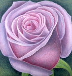 Big Rose, 2003 (oil on canvas) Fine Art Print by Ruth Addinall