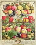 September, from 'Twelve Months of Fruits', by Robert Furber (c.1674-1756) engraved by Henry Fletcher, 1732 (colour engraving) Postcards, Greetings Cards, Art Prints, Canvas, Framed Pictures, T-shirts & Wall Art by Pieter Casteels