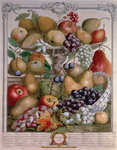 November, from 'Twelve Months of Fruits', by Robert Furber (c.1674-1756) engraved by James Smith, 1732 (colour engraving) Postcards, Greetings Cards, Art Prints, Canvas, Framed Pictures & Wall Art by Pieter Casteels