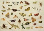 A Study of insects (oil on copper) Wall Art & Canvas Prints by Trevor Neal