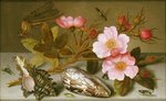Still life depicting flowers, shells and a dragonfly Fine Art Print by Albert Williams