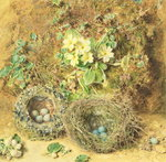 Primroses and Birds' Nests (w/c on paper) Wall Art & Canvas Prints by William Henry Hunt