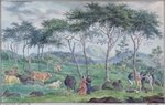 Herd of cattle with cowherds near the river on the east of the Ile de la Reunion, October 1812 Fine Art Print by French School