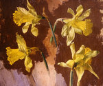 Study of daffodils, c.1830 Fine Art Print by Norman Hollands