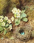 Primroses and Bird's Nest with Three Blue Eggs Wall Art & Canvas Prints by William Henry Hunt