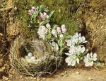 Branch of Apple Blossom and Bird's Nest Wall Art & Canvas Prints by William Henry Hunt