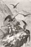 Édouard François André and companion being attacked by condors near Calacali, Pichincha Province, Ecuador, during his botanising expedition in the foothills of the Andes in 1875-76 (engraving) Postcards, Greetings Cards, Art Prints, Canvas, Framed Pictures, T-shirts & Wall Art by Vicente Alban