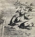 Annual migration of swallows, from 'Our Own Magazine', published 1885 (engraving) Postcards, Greetings Cards, Art Prints, Canvas, Framed Pictures & Wall Art by Stanley Cooke