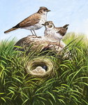 Skylarks (gouache on paper) Fine Art Print by William Henry Hunt